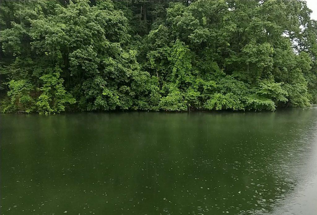 対面岸川のカバー
